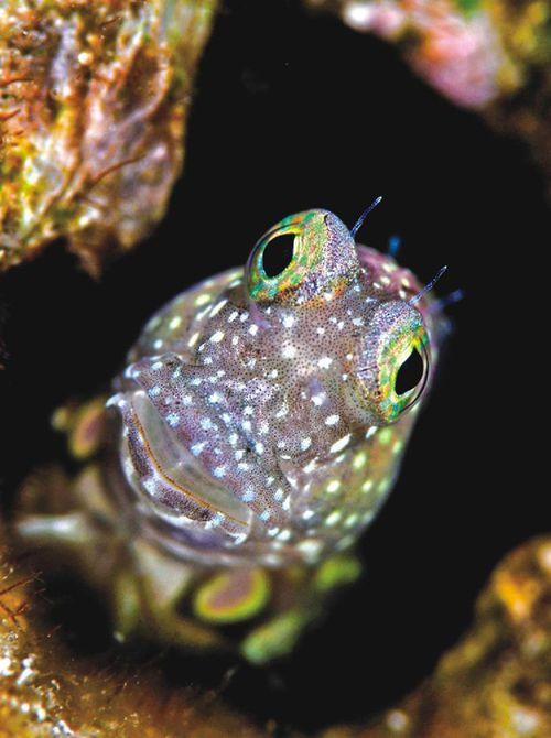 壁纸 动物 两栖 蛙 鱼 鱼类 500_670 竖版 竖屏 手机