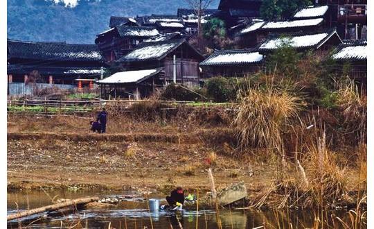 高椅古村 沉睡了600余年的梅